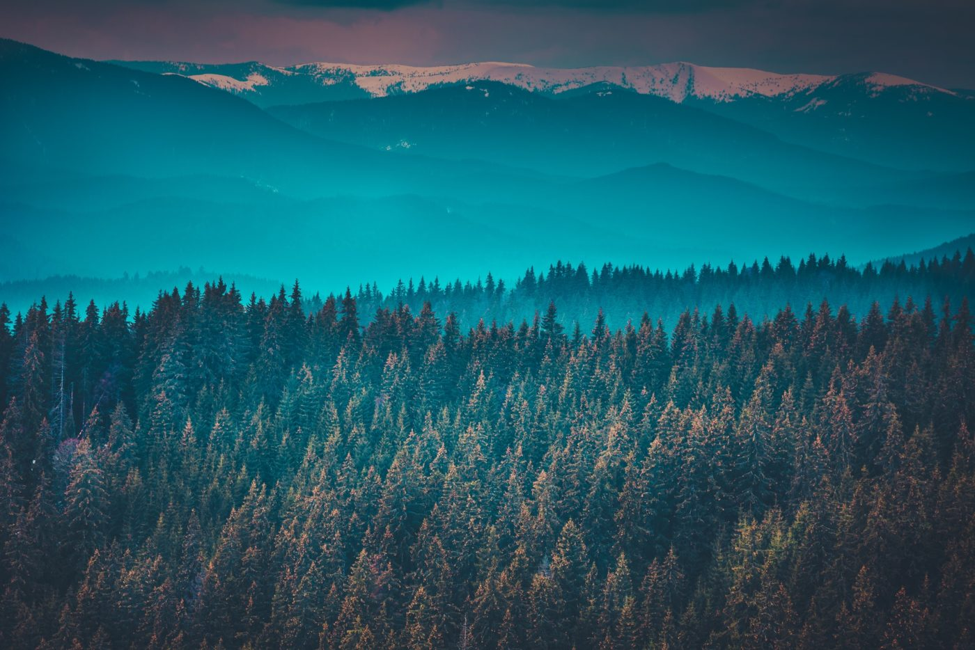 Fantastic mountain peaks and forest